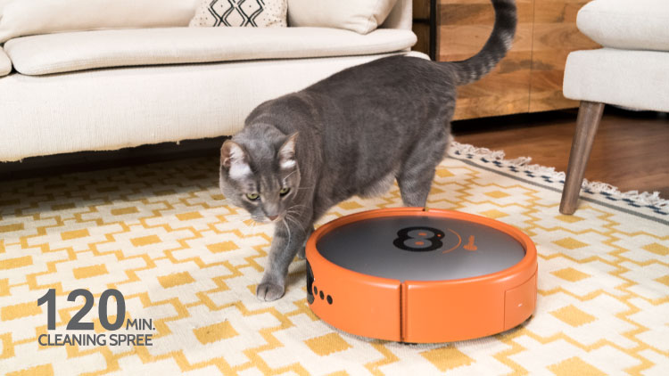 Robot vacuum cleaning up animal hair.